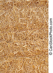 hay - bunches of hay under sunny