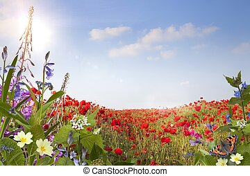 Summer background - Wild flower background with poppies,...