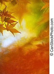 Japanese maple leaves in colorful autumn season