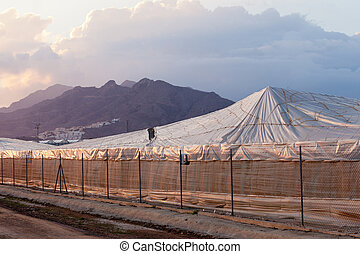 Large scale industrial plastic greenhouse in Spain - Large...