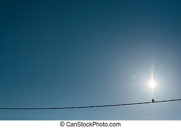 Pigeon on a telephone pole against a deep blue sky and the...