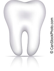 Healthy white tooth illustration, isolated on white