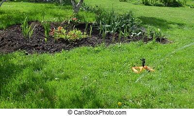 watering tool woman - Gardener woman plug water hose to...