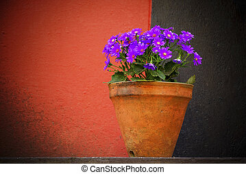 Purple flowers on red and black background
