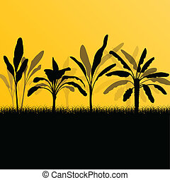 Exotic banana tree plants plantation detailed silhouette...