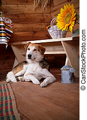 The dog lies under a bench in the rural house.