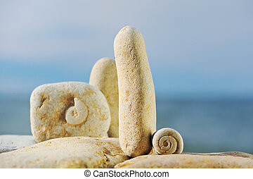 Volute - Texture of spiral snail at the white stones