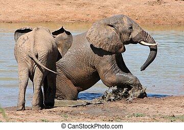 Elephants in Water - African elephants at the waterhole on a...
