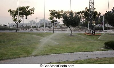 Man walking in watering park before sunrise