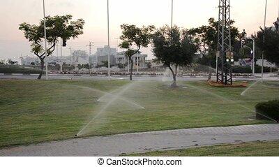 Man walking in watering park before sunrise