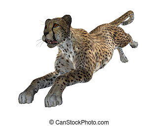 cheetah - image of cheetah