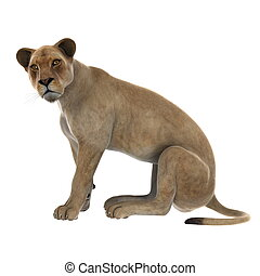 lion   - image of lioness