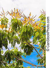 Deciduous trees in exotic countries