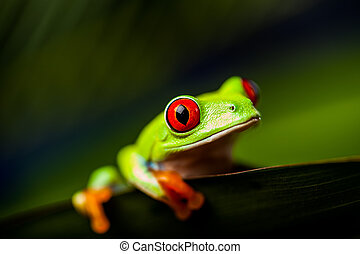 Beautiful colorful frog - Exotic frog