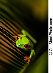 Frog in the jungle, vivid colors