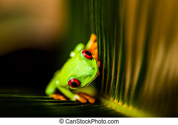 Frog in the jungle, vivid colors - Exotic frog