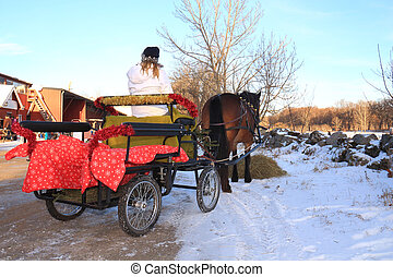 Cheval, voiture, hiver, jour