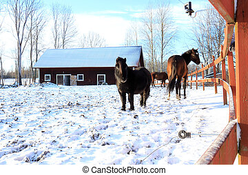 horses in a paddock covered with snow