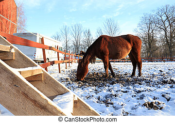 horses in a wintry paddock