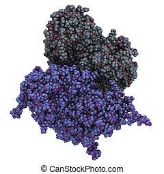 Glucocerebrosidase beta-glucosidase enzyme molecule...