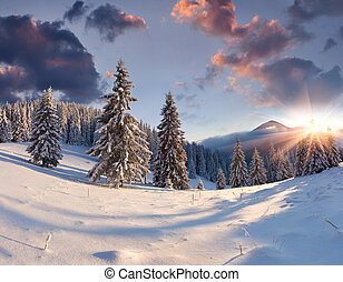Beautiful winter sunrise with snow covered trees.