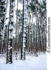 nieve, árboles, invierno, bosque