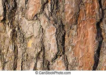 corteza, árbol, textura, pino