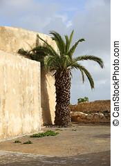 Palme in Marokko