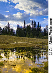 Pond in the WIlderness