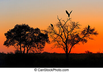 Masai Mara Sunset - A sunset in Masai Mara National Reserve.