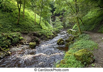 Yorkshire river - River through woodland, Yorkshire Dales...