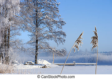 Frozen lake with jetty - Frozen lake with bare tree and...