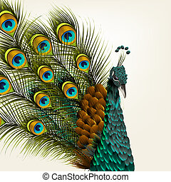 Cute background with vector detailed peacock on white for...