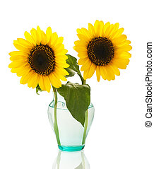 sunflowers in vase - sunflowers in a vase isolated on white...