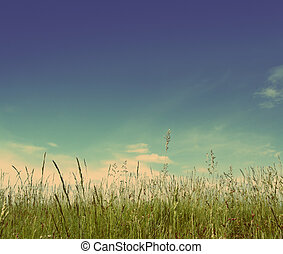 green grass under blue sky - vintage retro style - green...