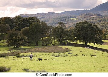 Lakeland shepherd, Cumbria - Loughrigg, Cumbria, UK –...