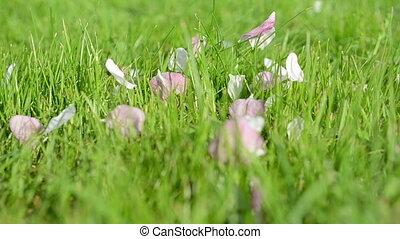 pink tree petals