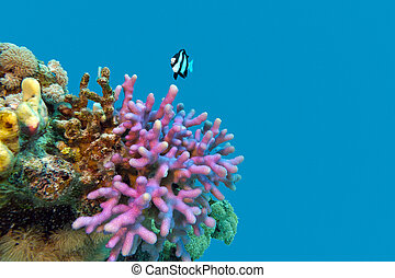 coral reef with violet hood coral end exotic fish at the...