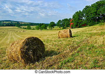 Hay Rolls - Harvested hay rolls in large, expansive field