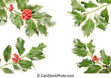 Holly twig border, decoration - Holly twig border, Christmas...
