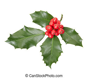 Holly twig, Christmas decoration isolated on white, clipping...