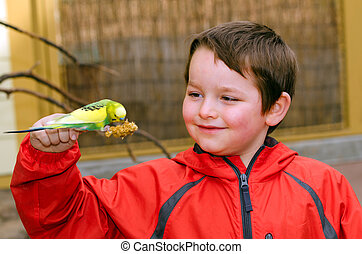 Happy boy holding parakeet - Happy boy holding and feeding...