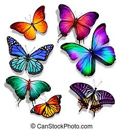 differente, molti, volare, isolato, Farfalle, fondo, bianco