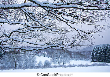 winter forest clearing