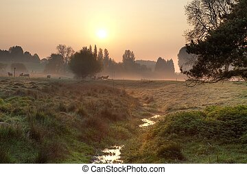 Misty morning in the English countryside - Farmland with...