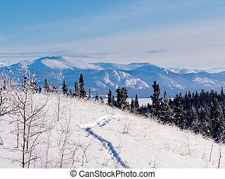 Taiga, Raqueta, Trayectoria, invierno, paisaje, Yukon,...