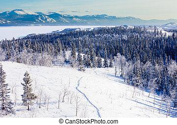 Snowshoe taiga trail landscape Yukon T Canada - Snow-shoe...