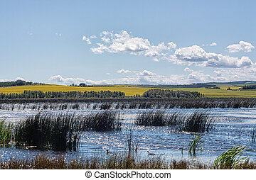 Marsh in the Alberta Prairies - Marsh in the Alberta...