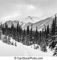 Winter in the Canadian Rockies - Snow shoe trail in...