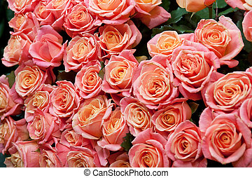 roses background - red natural roses background